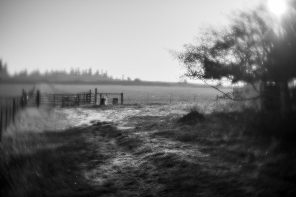 black and white whidbey farm